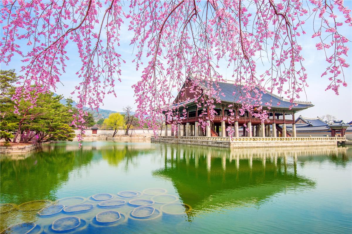 Cherry Blossoms in Japan & Korea 2019 - AV Travel
